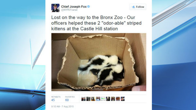 City scents: 2 baby skunks found in NYC subway station