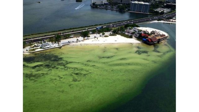 Health Advisory: High bacteria levels found at 3 local beaches