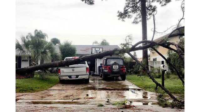 Tree-down-on-a-truck_210750