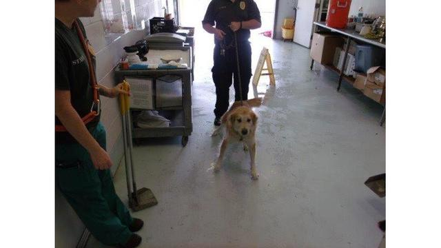 Pasco Animal Services Surrender_243940