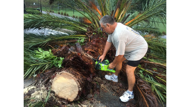Charterboat-captain-Tom-Sprague-steps-in-to-start-moving-fallen-palm-tree-out-of-the-way-of-Gulf-to-Bay-Boulevard-in-Clearwater_448545