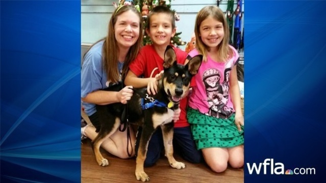 Dog found in Plant City dumpster gets new home for Christmas