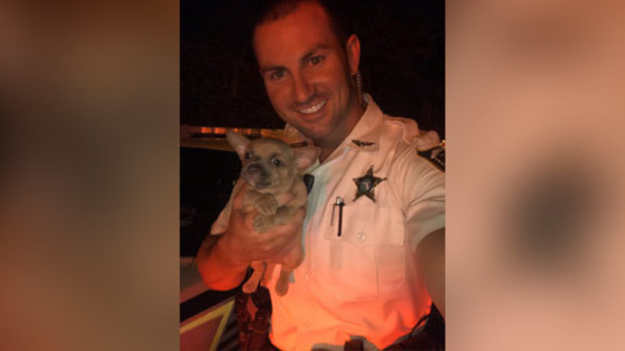Adorable pictures: Deputy saves puppy left behind during ...