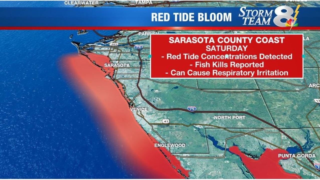 Red tide persists along Sarasota County coast