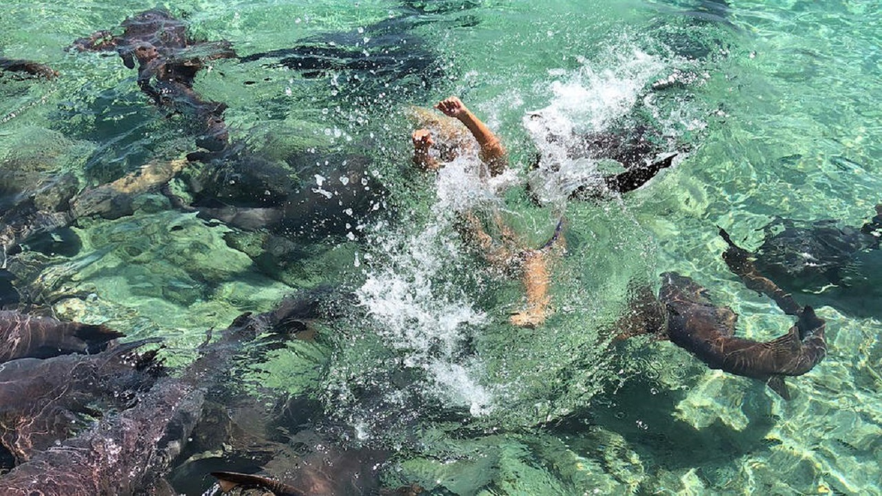 Instagram model bitten by shark during photo shoot - WFLA