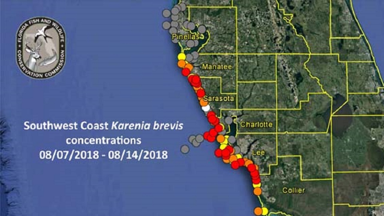 Red tide update: Respiratory irritation reported in Pinellas