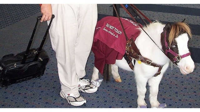 Image result for southwest airlines miniature horse