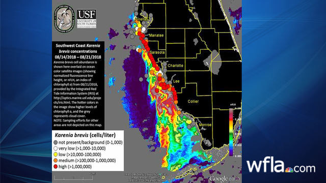 Red Tide Update: Higher concentrations of K  brevis found in