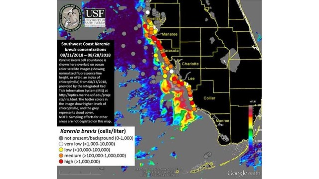 Red Tide Detected In High Concentrations Off Pinellas Coast