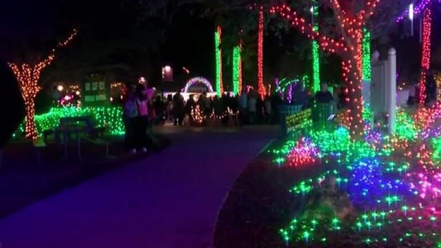 - Holiday Lights In The Gardens Is Back At The Florida Botanical Gardens