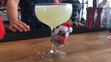 Holiday cocktail bar Miracle at Mezzo pops up in St. Pete