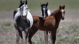 The federal government is offering $1,000 to anyone who adopts a wild horse