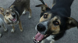 FDA issues warning for people and pets after dog food tests positive for Salmonella