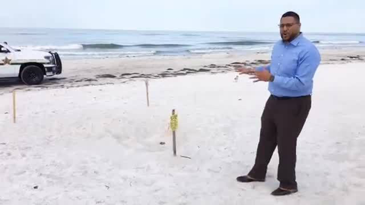 First sea turtle nests of 2019 discovered on Madeira Beach