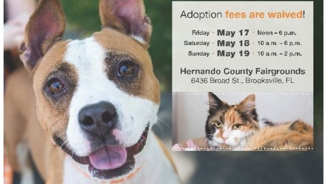 Adoption fees waived for cats, dogs at Tampa Bay Regional Mega Pet Adoption event