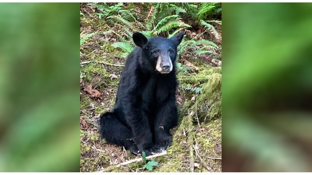 Friendly black bear killed after people feed it, take selfies