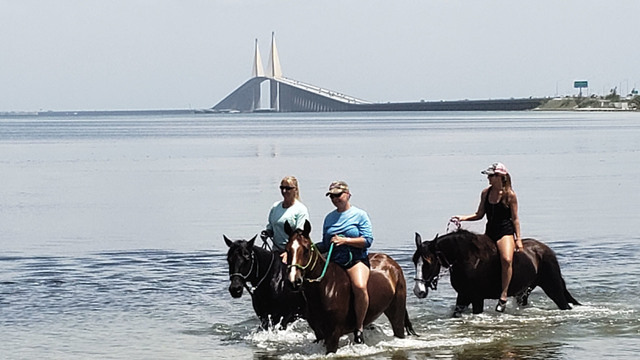 Horse riding through Tampa Bay waters causing concerns